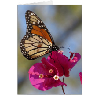 Monarch butterfly on bougainvillea blossom card