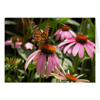 Monarch Butterfly on Coneflower Card
