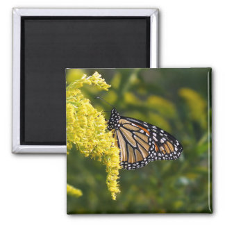 Monarch Butterfly on Goldenrod Magnet