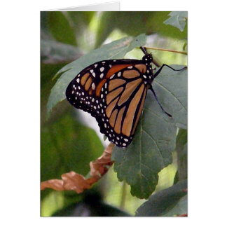 Monarch Butterfly on Green Leaves Greeting Card