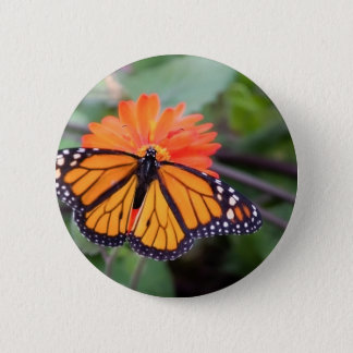 Monarch butterfly on orange flower 6 cm round badge