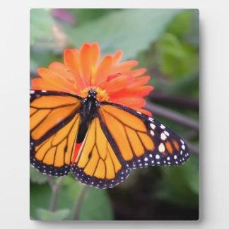 Monarch butterfly on orange flower plaque