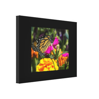 Monarch Butterfly on pink marigold Gallery Wrap Canvas