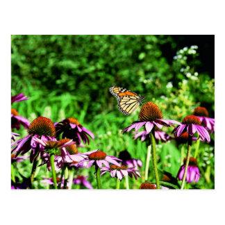Monarch butterfly on purple prairie coneflower postcards