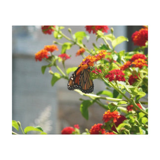 Monarch Butterfly on Red Butterfly Bush Canvas Prints