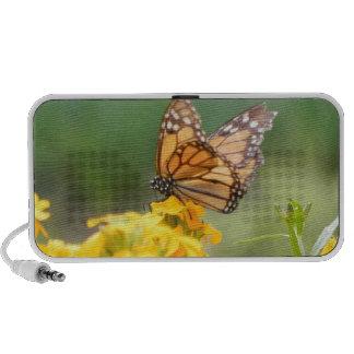 Monarch Butterfly on Siberian Wallflowers iPod Speakers