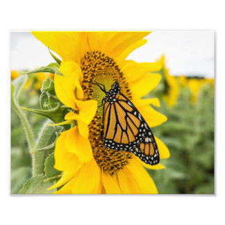 Monarch Butterfly on Sunflower Photography Print