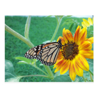 Monarch Butterfly On Sunflower Postcards