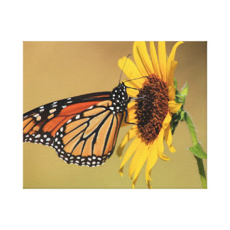 Monarch Butterfly on Sunflower Stretched Canvas Prints