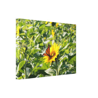 Monarch butterfly on sunflower wrapped canvas gallery wrap canvas
