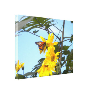 Monarch Butterfly on Sunflower wrapped canvas Canvas Print