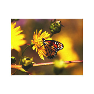 monarch butterfly on yellow flower canvas print