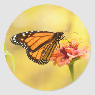 Monarch Butterfly on Zinnia Classic Round Sticker