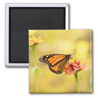 Monarch Butterfly on Zinnia Magnet