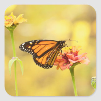 Monarch Butterfly on Zinnia Square Sticker