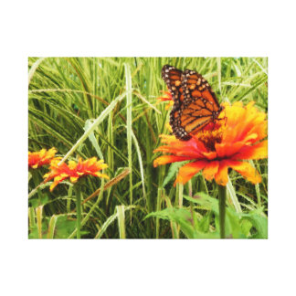 Monarch Butterfly Opening Wings on Zinnia Painting Gallery Wrapped Canvas