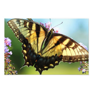 Monarch Butterfly Photo Print