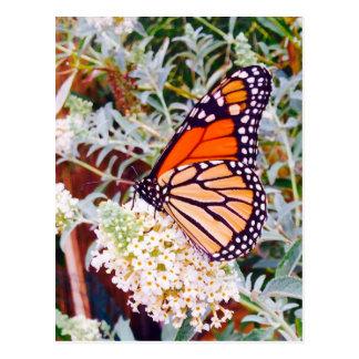 Monarch Butterfly Postcard