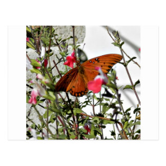 Monarch Butterfly Postcards