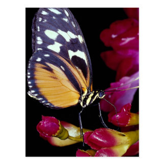 Monarch butterfly post card