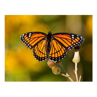 Monarch Butterfly Post Cards