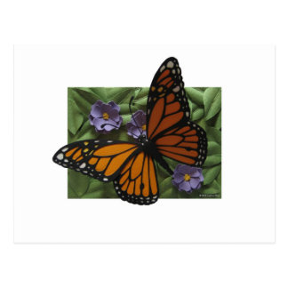 Monarch Butterfly Postcard