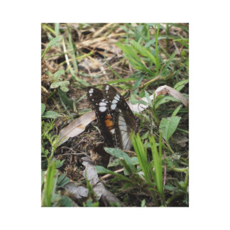 MONARCH BUTTERFLY QUEENSLAND RURAL AUSTRALIA STRETCHED CANVAS PRINTS