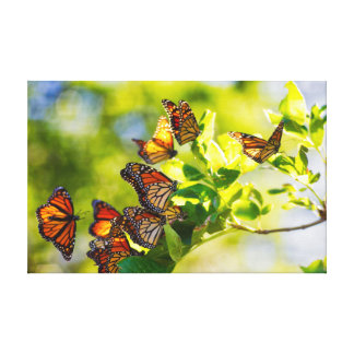 Monarch Butterfly Resting Place Canvas Print