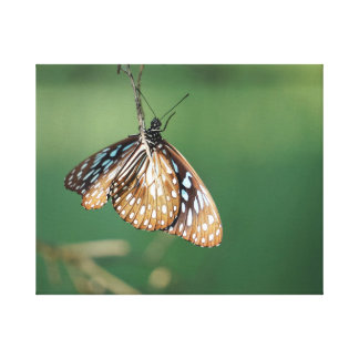 MONARCH BUTTERFLY RURAL QUEENSLAND AUSTRALIA GALLERY WRAPPED CANVAS