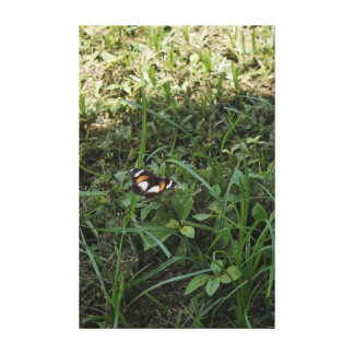 MONARCH BUTTERFLY RURAL QUEENSLAND AUSTRALIA STRETCHED CANVAS PRINT