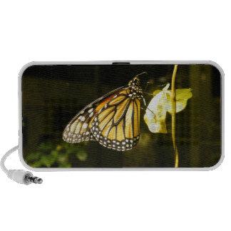 Monarch Butterfly Notebook Speaker