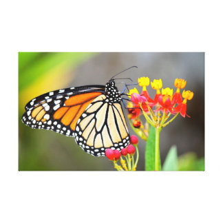 Monarch Butterfly Spring Is In The Air Gallery Wrap Canvas