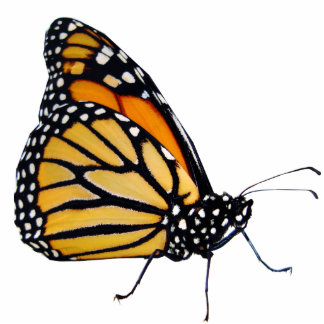 Monarch Butterfly Standing Photo Sculpture