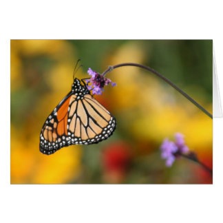 Monarch Butterfly Stops for Pollen Greeting Card
