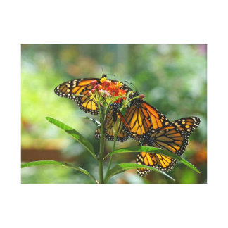 Monarch Butterfly Summer Botanical Garden canvas Gallery Wrapped Canvas
