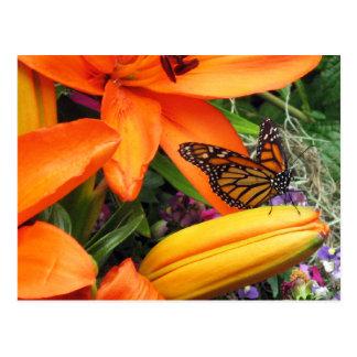 Monarch Butterfly Throne Orange Nature Postcard