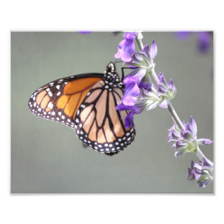 Monarch Butterfly with Flowers Photographic Print