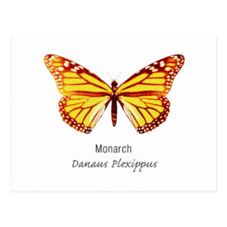 Monarch Butterfly with Name Postcard