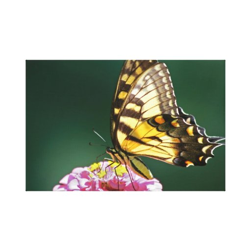 Monarch Butterfly Wrapped Canvas Gallery Wrap Canvas
