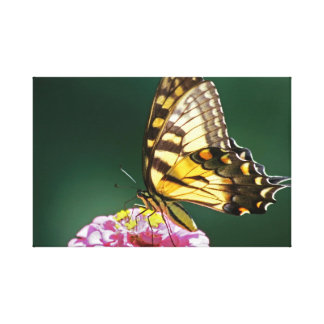 Monarch Butterfly Wrapped Canvas Canvas Print