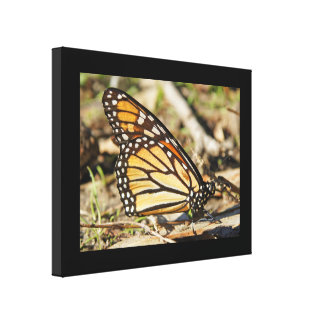 Monarch Butterfly Wrapped Canvas Print