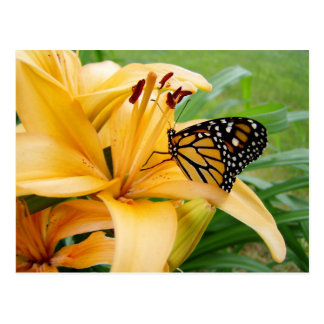 Monarch Butterfly Yellow Lily Flower Photo Postcards