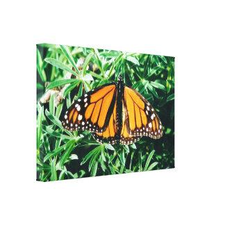 Monarch Butterful Canvas Print