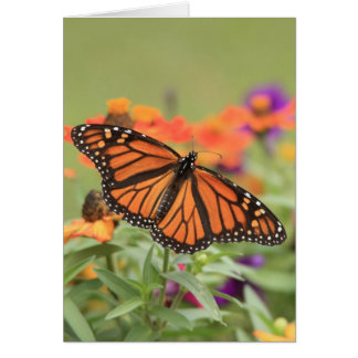 Monarch Note Card