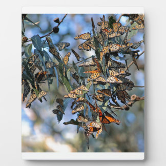 Monarch Cluster Plaque