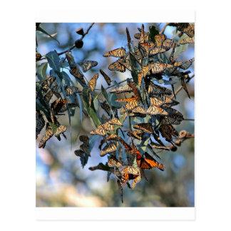 Monarch Cluster Postcard