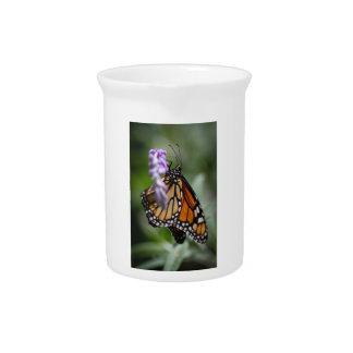 Monarch Danaus Plexippus Pitcher