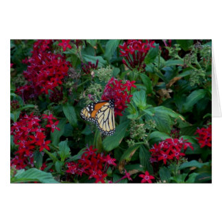 Monarch in Motion Note Card