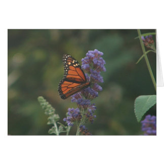 Monarch on a Butterfly Bush Greeting Cards