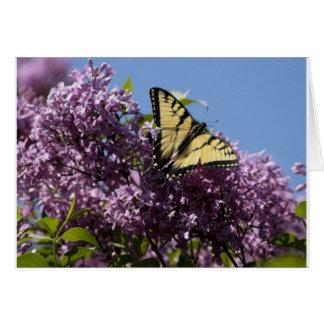 Monarch on Butterfly Bush Cards